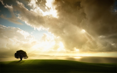 tree_lonely_meadow_grass_sky_clouds_light_14619_1920x1200